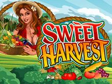 Виртуальный игровой Вулкан аппарат Сладкий Урожай